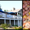 Siren's Seafood Market