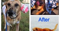Tampa Bay Veterinary Emergency Service - Tampa, FL