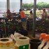 Houston Garden Centers