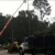 Southern Tree Services Inc