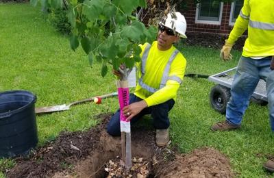 Loyal Tree Service