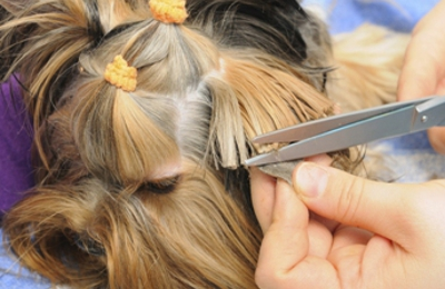 Pampered Paws Salon - Lutherville Timonium, MD