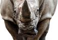 Rhino Rubber, LLC - Akron, OH