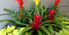 San Diego Botanicals Inc - El Cajon, CA