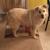 Carson Road Pet Clinic