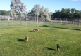 Puppy Love Suites - Nampa, ID