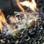 Specialty Fireplaces by Wayne Holsapple
