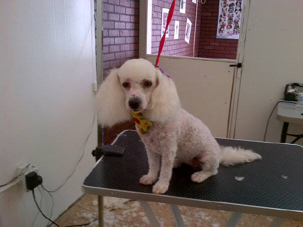 Doggy wash pet grooming 9834 dyer st el paso tx 79924 yp solutioingenieria Image collections
