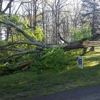 Greater Pittsburgh Tree Service