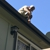 Colorado Springs quality gutter co