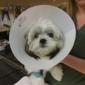 AV Veterinary Center - Lancaster, CA