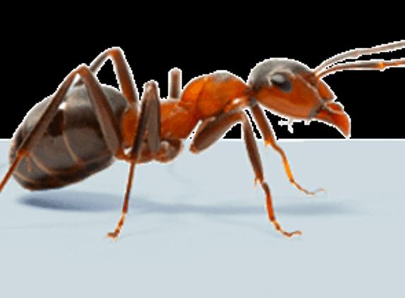 Knockout Pest Elimination - Jacksonville, FL