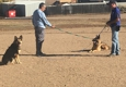 Colorado Dog Academy Inc - Broomfield, CO