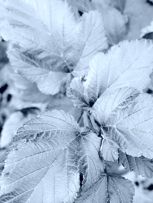 Metalic Leaves..Fun To Look At