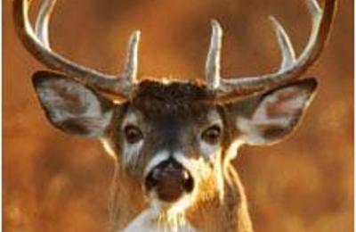 Buck Rub Outfitters LTD - Pewaukee, WI