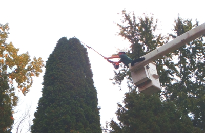 Precision Tree & Shrub Services Inc. - Holly, MI