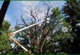 Jesse Scott's Tree Service