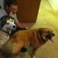 New Hope Animal Rescue Inc - Hurricane, WV