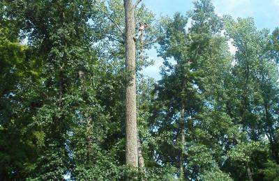 Thompson's Tree Service