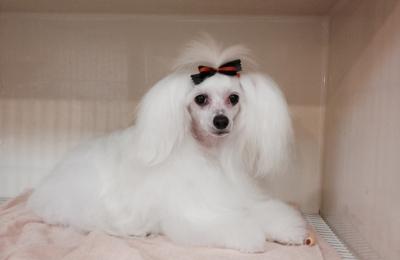 Professional Pet Spa - Marietta, GA