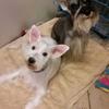 Dana & Friends Pet Grooming LN