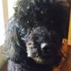 Premier Pets Dog Boarding