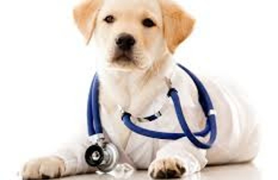 ABC Veterinary Hospitals - San Diego, CA