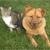 Pet Clinic at Woods Corner - Bruce Radomski DVM