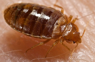 Detroit Michigan Pest Control - Detroit, MI