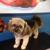 Puppy Kutz