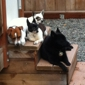 Home Away From Home Inc. K9 Daycare & Boarding - Eagle River, AK