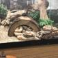 Alligator Alley - Oklahoma City, OK
