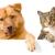 Neighborhood Pet Clinic