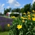 Purple Rain Lavender Farm