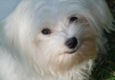 Shani's-Four Your Paws Only Pet Grooming - Tarzana, CA