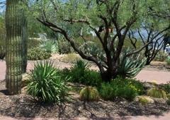 Goodman's Landscaping and Maintenance - Phoenix, AZ