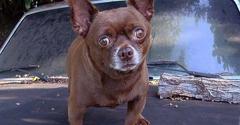 Miami Pet Emergency - Miami, FL. Wobbly