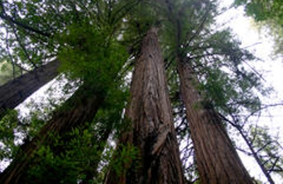 Henry Cowell Redwoods State Park - Felton, CA