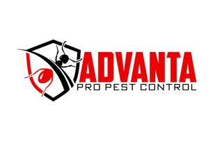 Local pest control services