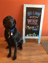 Gus, the friendly wine shop pup