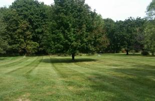 Great looking lawn