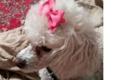 Maricopa County Animal Shelter - Phoenix, AZ. Pretty in pink