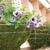 Flowerbuds Greenhouse