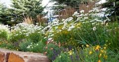 Dwyer Greens & Flowers - New Castle, CO
