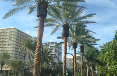 Premium Tree Service Corp - Miami, FL