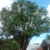 Amezola Tree Service
