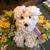 D'ee Angelic Rose Florist