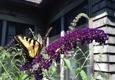 Leo's Landscaping, Lawn & Garden Solutions, Inc. - Danbury, CT