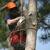 Zamora Tree Sevice