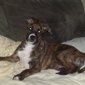 Galax-Carrol-Grayson Animal Shelter - Galax, VA